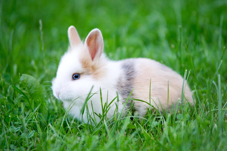 Cucciolo di coniglio