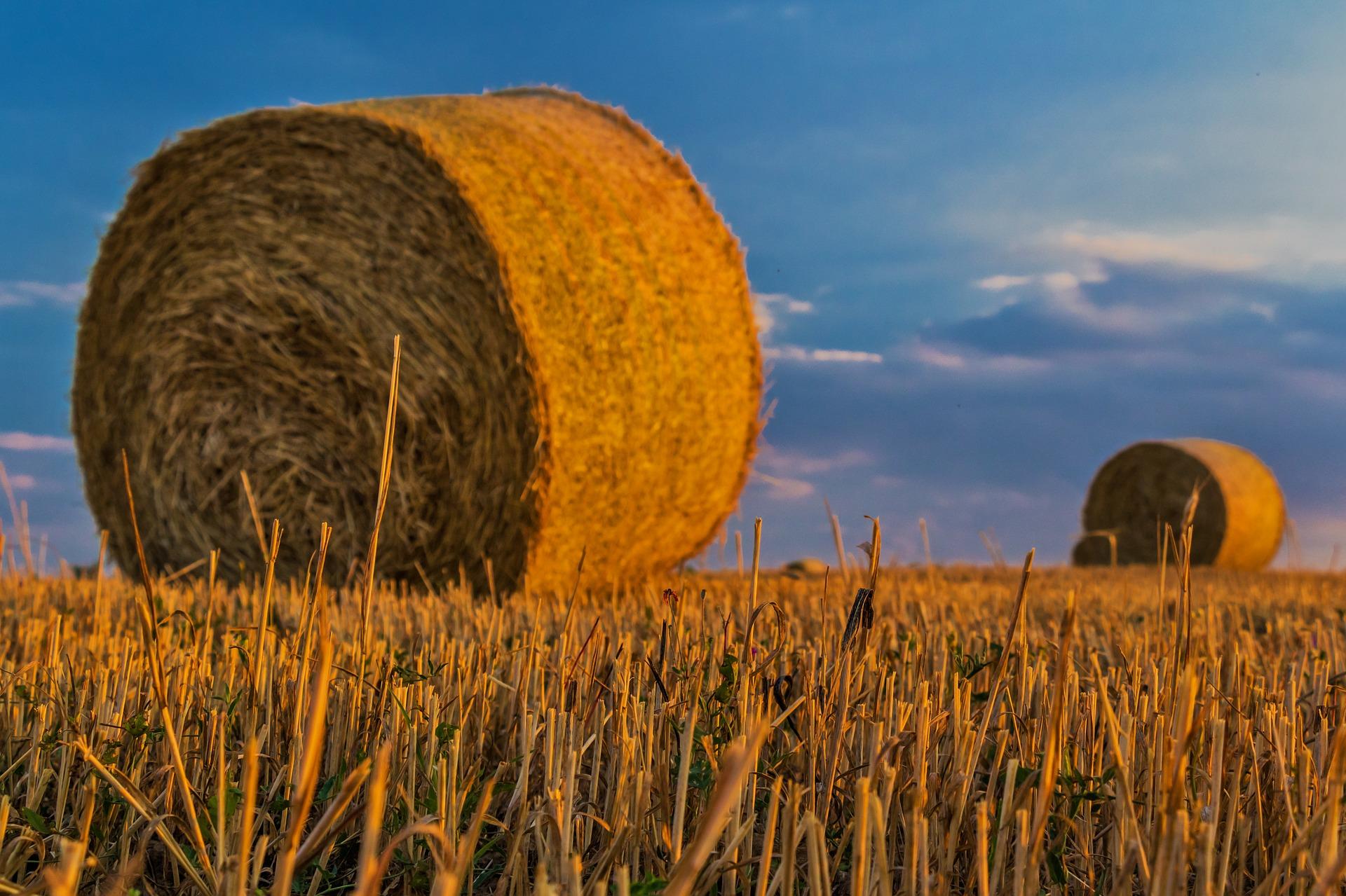 cooperative agricole agricoltura veneta