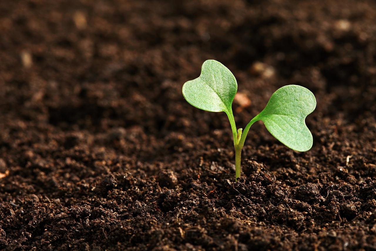 Agricoltura biologica, al via il corso di bio auditor