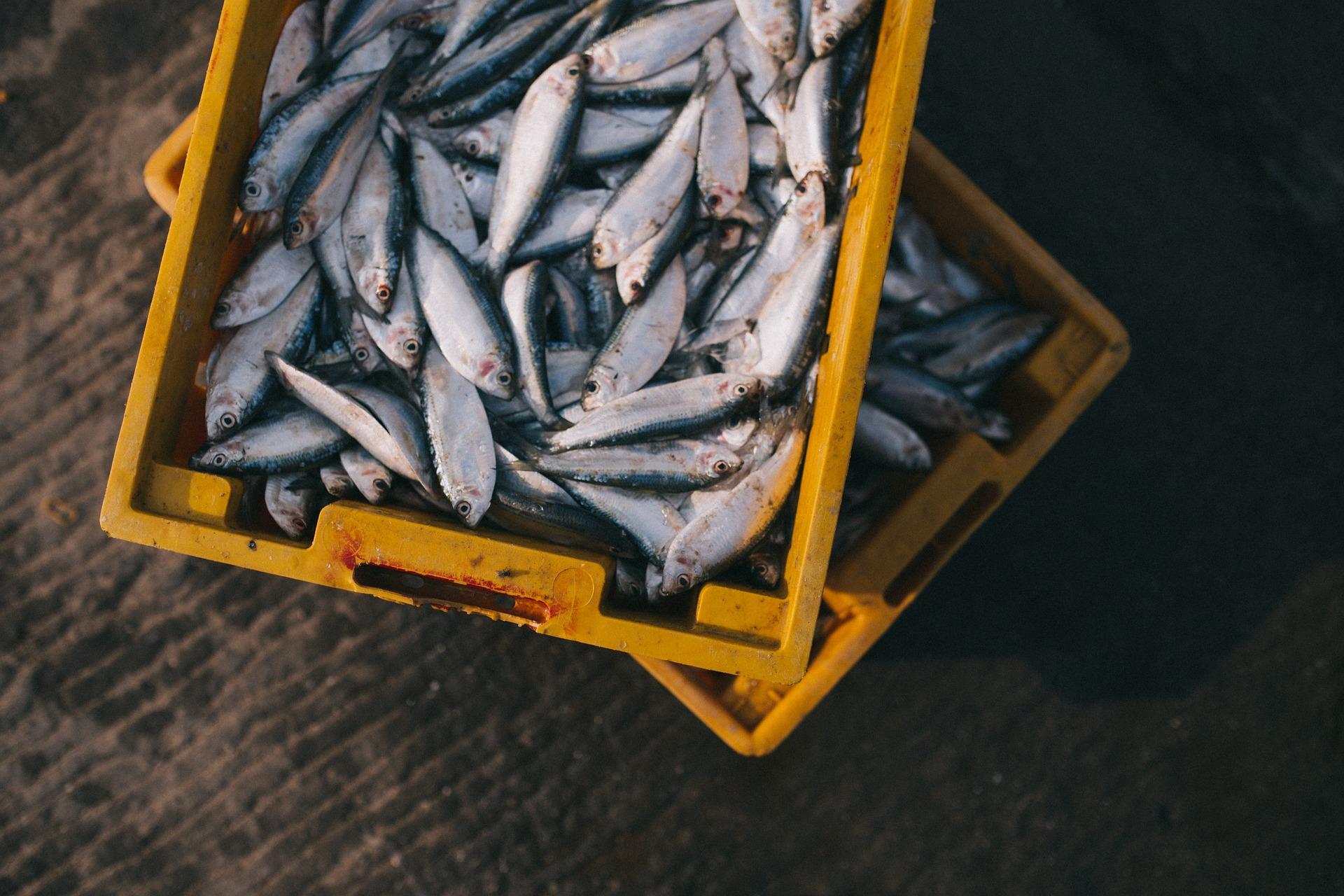 pesce pesca mare