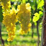Nasce il Consorzio di tutela dei vini Doc delle Venezie