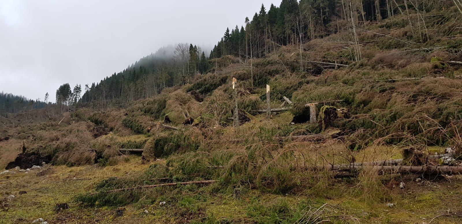 alberi-caduti-altopiano-asiago