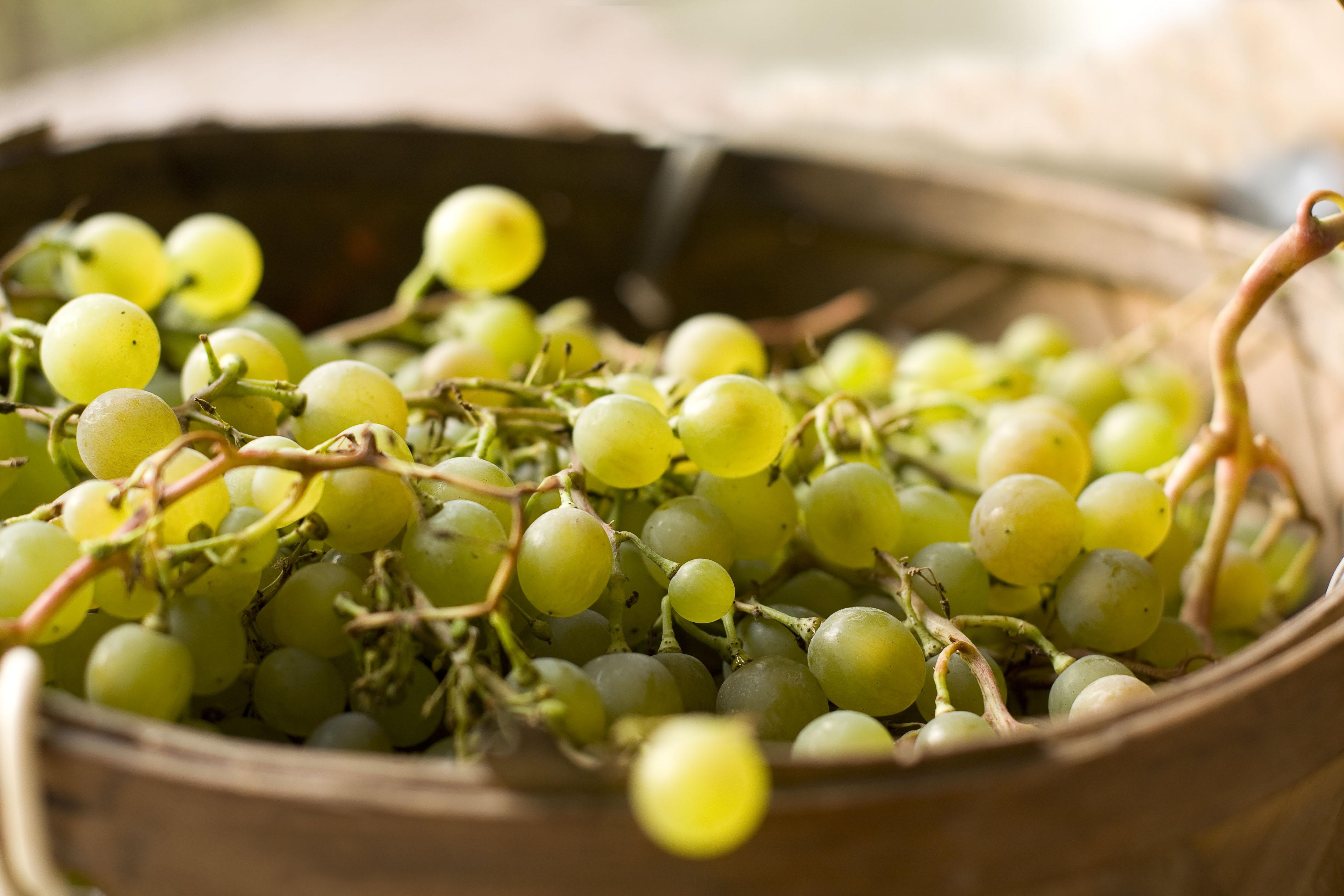 Un grappolo d'uva bianca
