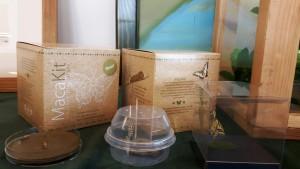 Il kit per la coltivazione dei bachi da seta