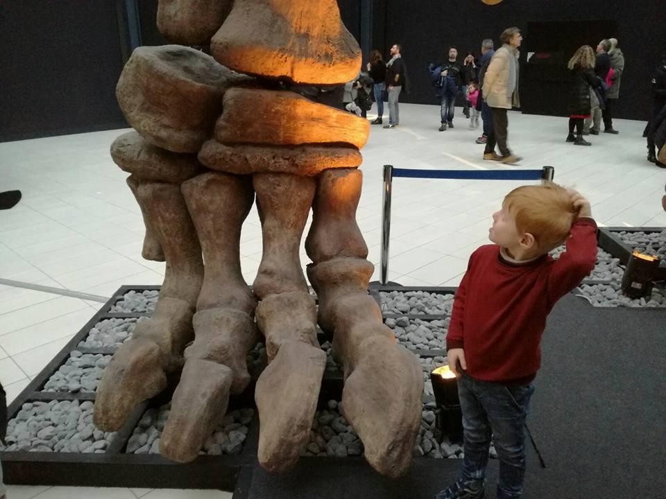 dinosauri dall'argentina mostra padova