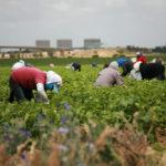 agricoltura-campi-shutterstock_54017278