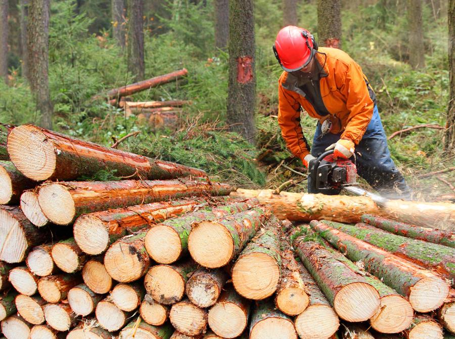 forestali-shutterstock_254935309