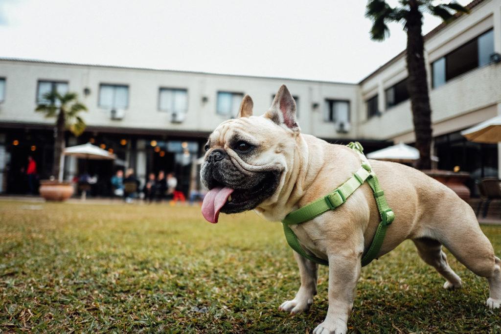 Ukidog, a Padova arriva la app per portare a spasso il cane senza litigi